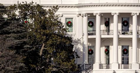 part of white house magnolia tree to be removed nbc news