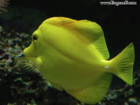 Download image animal fish pc android iphone and ipad wallpapers