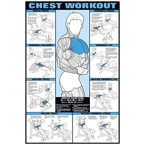 chest workout with dumbbells at home without bench 11 best workouts images on pinterest abdominal exercises