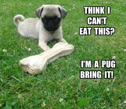 pug child meme 17 best images about pug memes lol on pug meme pug and