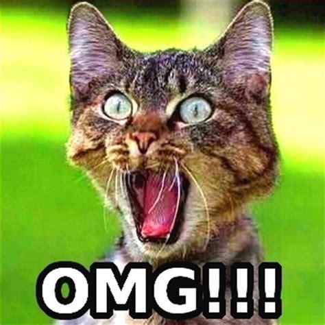 Omg Cat Meme - image gallery omg meme