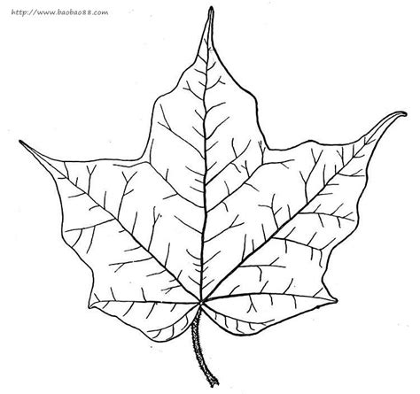 sycamore leaf coloring page sycamore leaf coloring coloring pages