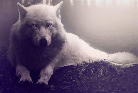 imagenes tumblr lobos forum