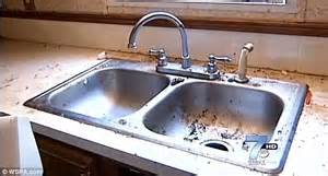 flies in kitchen sink discovered living with rotting carcasses of more
