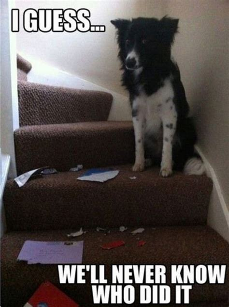 Joking Dog Meme - more funny dog memes 04