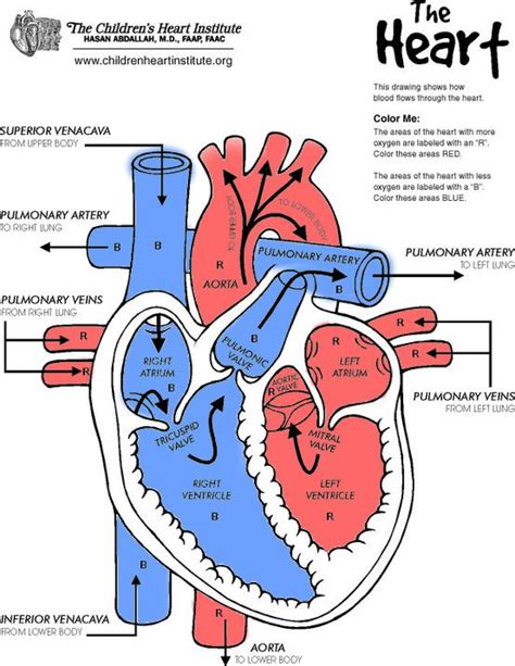 diagram of the heat best 25 human diagram ideas on