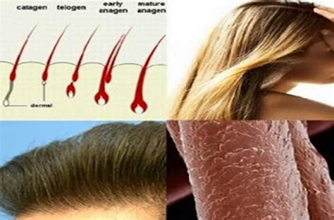 hairstyles that makes your hair grow 16 ways to make your hair grow faster naturally male