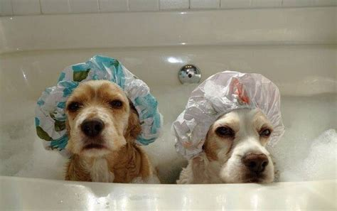 how to make bath time fun for dogs dog training nation bath time dogs funny animal pictures