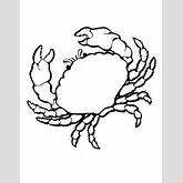 Shells Coloring Page ClipArt Best 36435 Sea Shells Coloring Pages