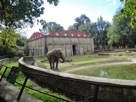 giardino zoologico napoli zoo di napoli la r 233 novation du zoo