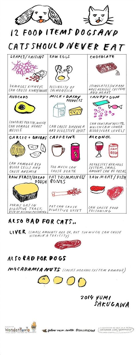is food bad for cats 12 dangerous foods you should never feed your cat or 171 the secret yumiverse