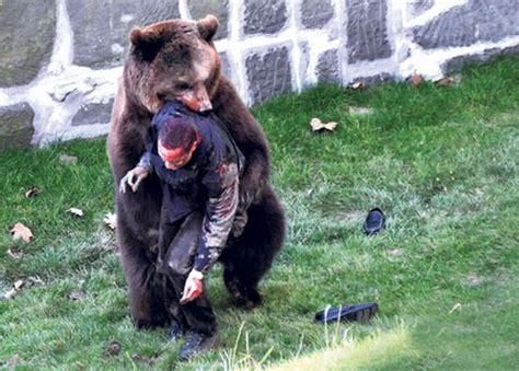 timothy treadwell bear attack pics for gt amie huguenard remains