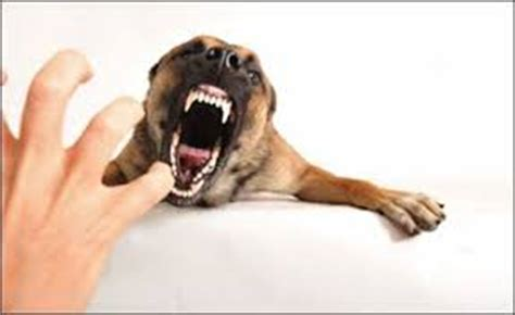 how to stop food aggression in puppies stop aggression archives how to your yourself