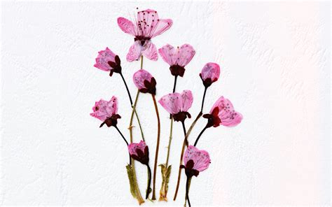 dried flowers preserve your garden with pressed flowers