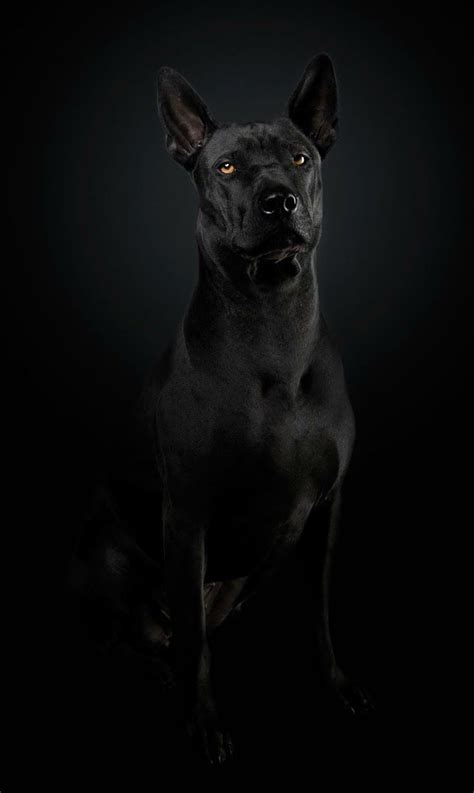 Wallpaper For Xolo Black | 41 best images about xolo in the city on pinterest