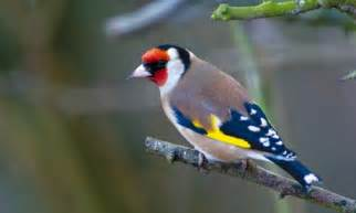 garten vogel garden birds uk animal