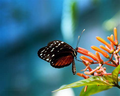 natural korean wallpaper with leaves loves butterfly nature wallpaper 4 butterfly in the flower nature
