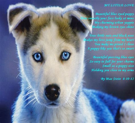 puppies quotes husky puppies with quotes quotesgram