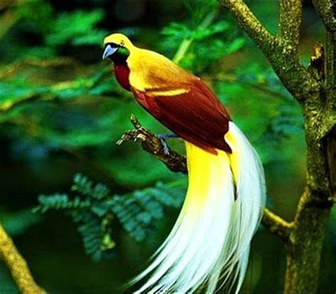 10 most expensive birds in the world