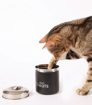 the pet pantry cat treats