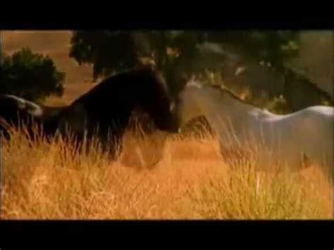 Gr Te Pferd Der Welt by Gr 246 223 Tes Pferd Der Welt Australien Hat Das Gr 246 223 Te Pferd