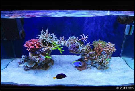 Saltwater Aquarium Aquascape by Minimalist Aquascaping Page 47 Reef Central