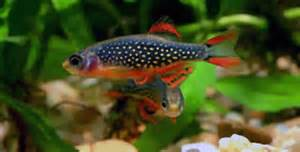Fish Breeds ? Information and pictures of saltwater and fresh water