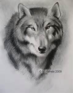 狼素描图片大全 狼素描图片下载