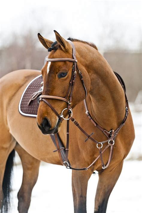 horse tack with lights details about horze constance snaffle bridle light brown
