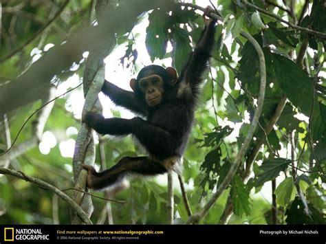 animals that swing from trees johnwu on genius