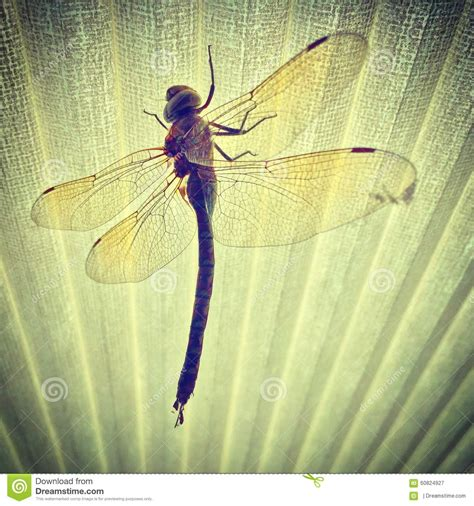 Dragonfly L Shade by Dragonfly Stock Image Image Of Dragonfly Shade Bugs