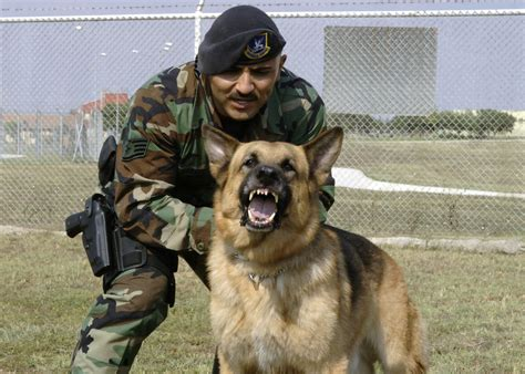 army dogs file and handler jpg wikimedia commons