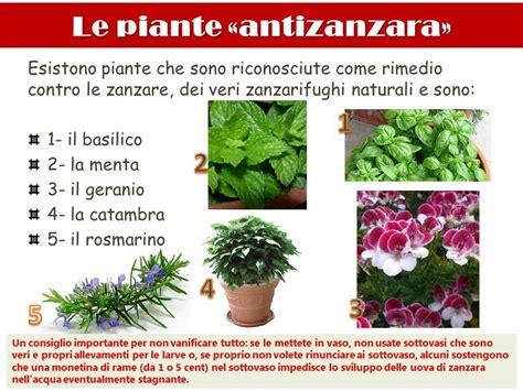 fiori antizanzare le piante antizanzara cristalfarma