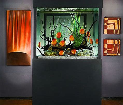 aquarium design group discus beautiful all things and search on pinterest