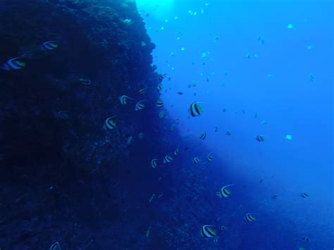 Sixty Set By Mauri snorkel lanai from lahaina whale