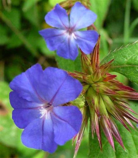 fiori di bach australiani floriterapia curarsi con i fiori