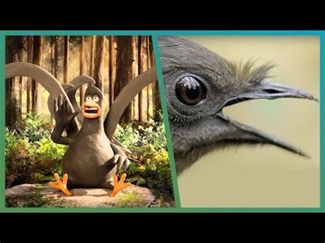 bbc creature comforts lyrebird meets attenborough ft aardman animations