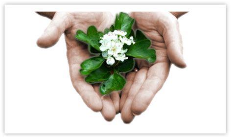 fiori di bach rimedi allergia stop risolvi le allergie in modo naturale