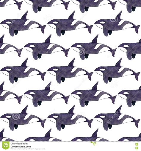 killer whale pattern image gallery orca pattern