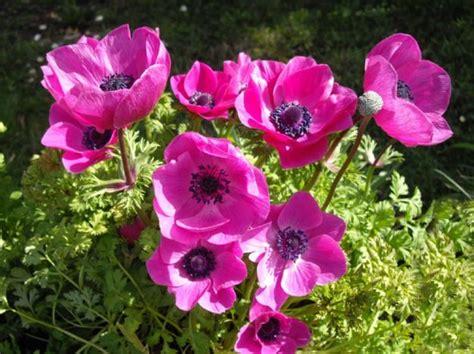 fiori primaverili elenco fiori primaverili da giardino l elenco pourfemme