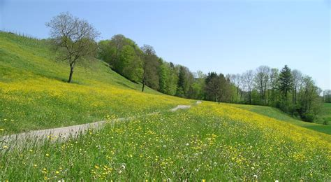 spring meadow scenery wallpaper kindred media