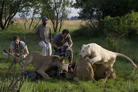 film white lion 2010 lion whisperer white lion official movie trailer