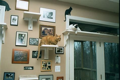 cat wall pets beautiful braces and everything