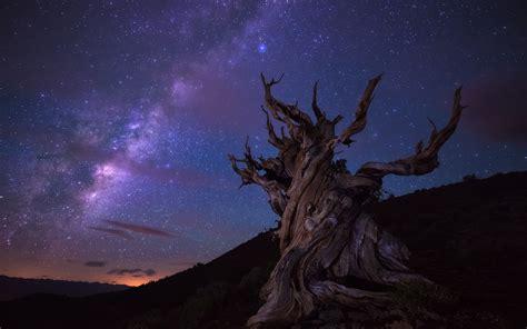 landscape trees stars wallpapers hd desktop  mobile