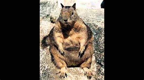 imagenes de animales feos y chistosos animales feos y gordos youtube
