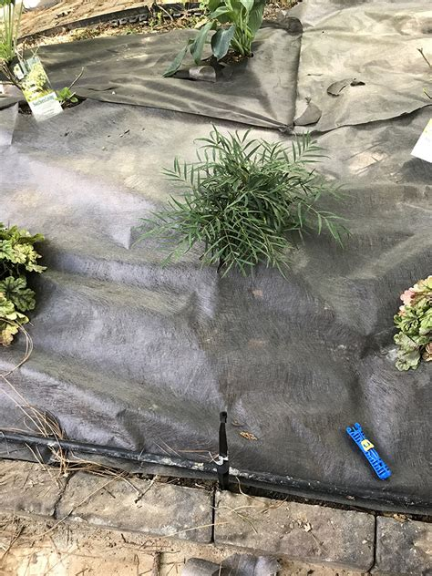 Landscape Fabric Well Create A Shade Garden Oasis In Your Backyard