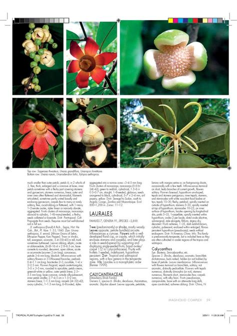 encyclopedia of tropical plants 1554074894 booktopia encyclopedia of tropical plants identification and cultivation of over 3000