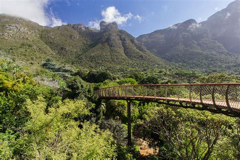 Kirstenbosch National Botanical Garden This Canopy Walkway Lets You Walk Above The Trees In Cape Town Bored Panda