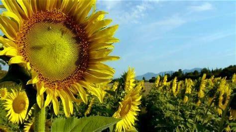beautify worldwide beautiful world italy 2 of 2 1080p hd youtube