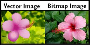 difference between bitmap and vector | bitmap vs vector